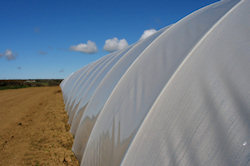 is poly tunnel